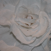 Crepe paper Flowers-Roses-Large
